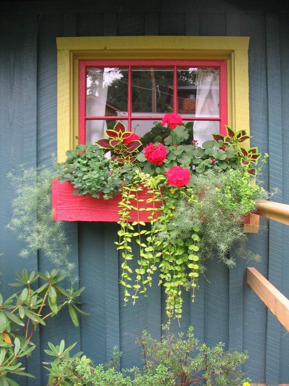 Способы декорации фасада дома цветущими растениями