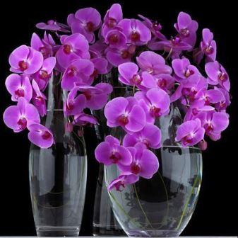 Как вырастить орхидею из детки, как вырастить орхидею из отростка