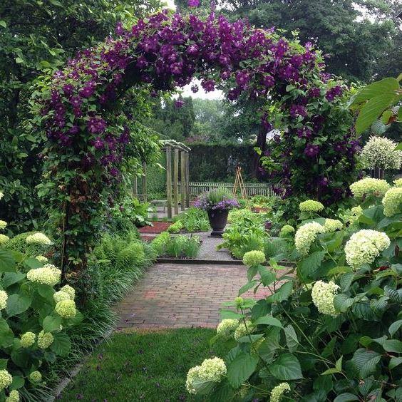 клематіси в саду