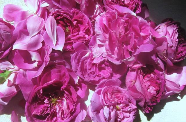 Лікер із пелюсток троянди