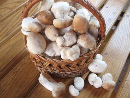 Заготівля білих грибів на зиму