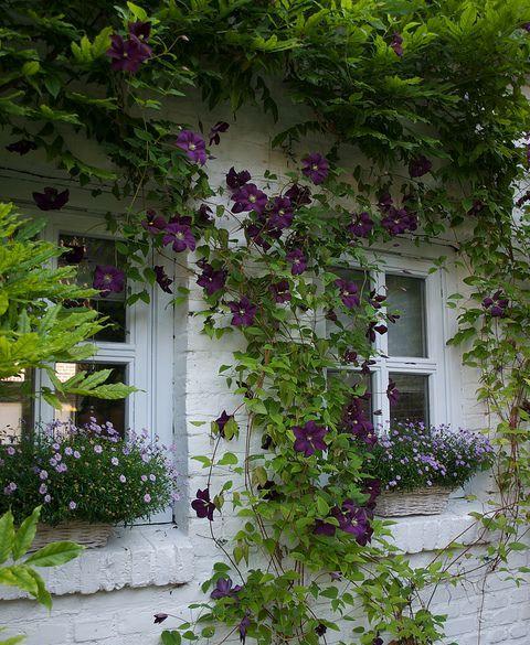 Декорація фасаду будинку квітучими рослинами