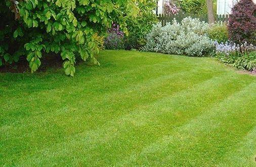 Догляд за газоном навесні