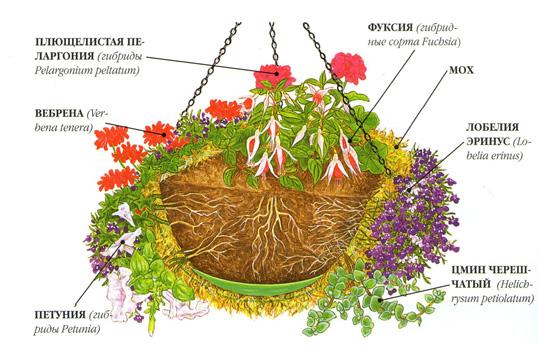 ампельні рослини в підвісних кашпо